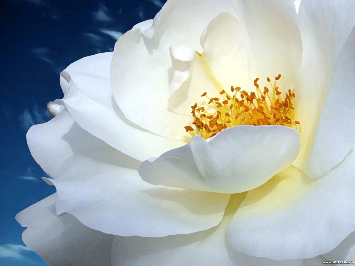 10392 descargar fondo de pantalla Plantas, Flores: protectores de pantalla e imágenes gratis