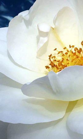 10392 скачать обои Растения, Цветы - заставки и картинки бесплатно