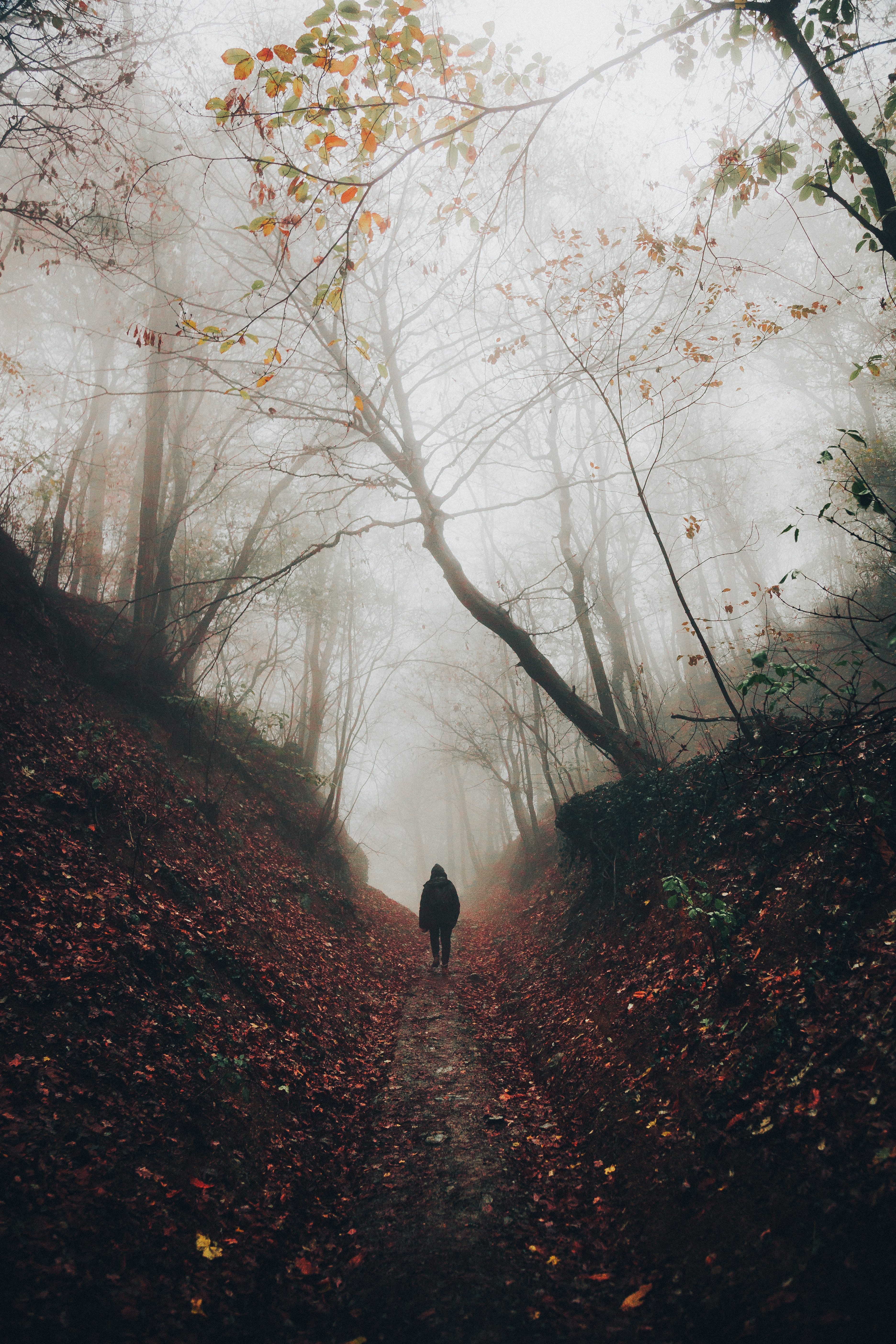 67920 Screensavers and Wallpapers Stroll for phone. Download Nature, Silhouette, Privacy, Seclusion, Forest, Fog, Stroll, Loneliness pictures for free