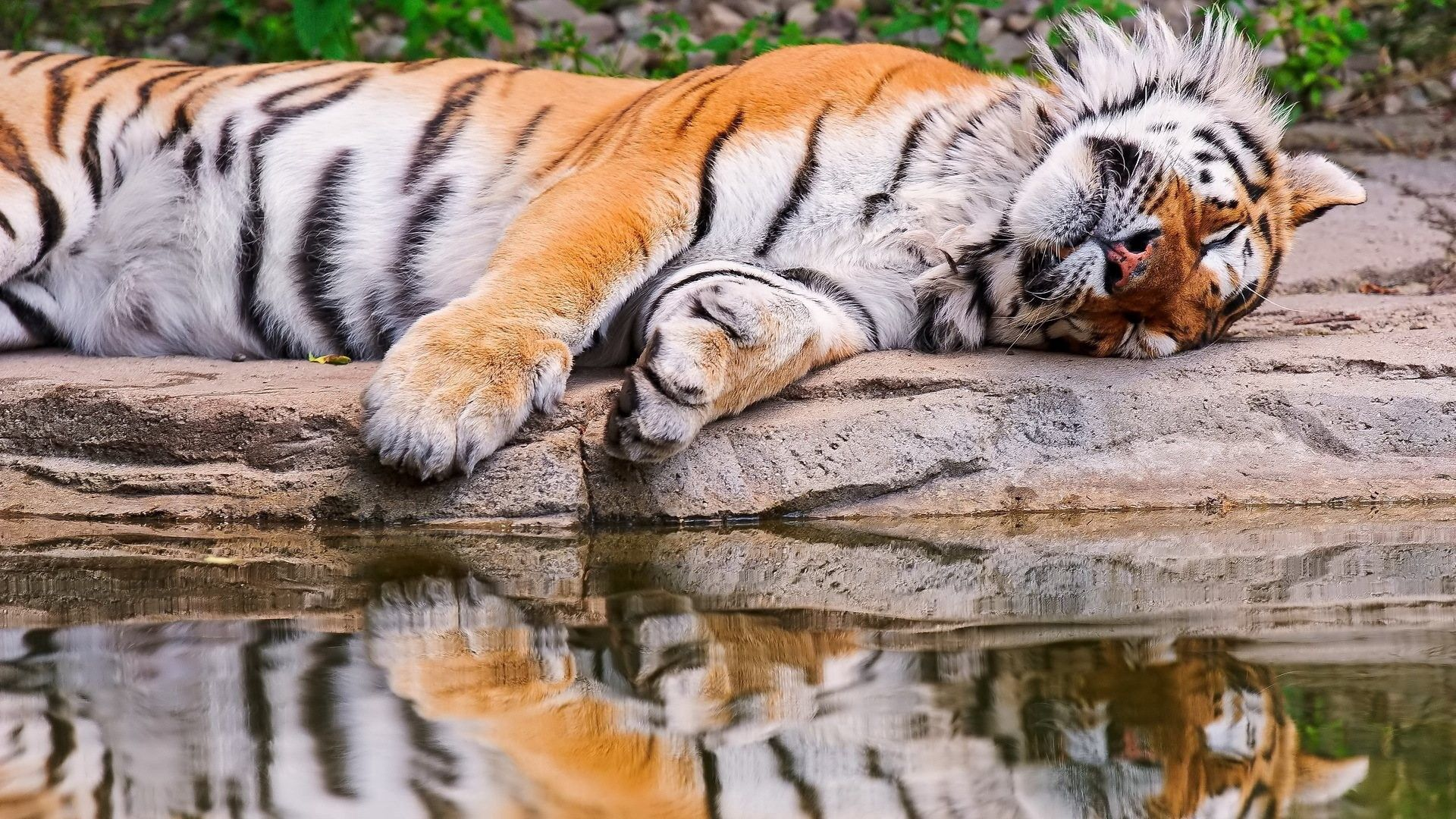95441 download wallpaper Animals, Tiger, Water, To Lie Down, Lie, Reflection screensavers and pictures for free