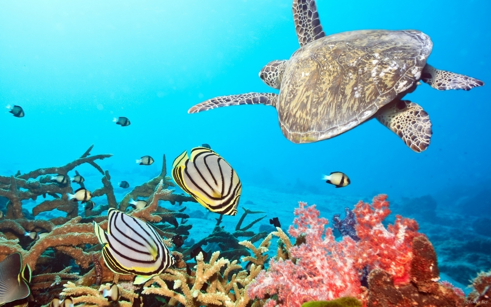 Download mobile wallpaper Animals, Turtles, Sea, Fishes for free.