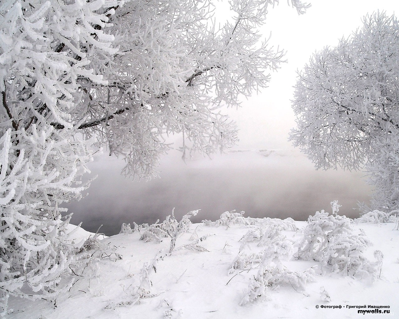 814 download wallpaper Landscape, Winter, Trees, Snow screensavers and pictures for free