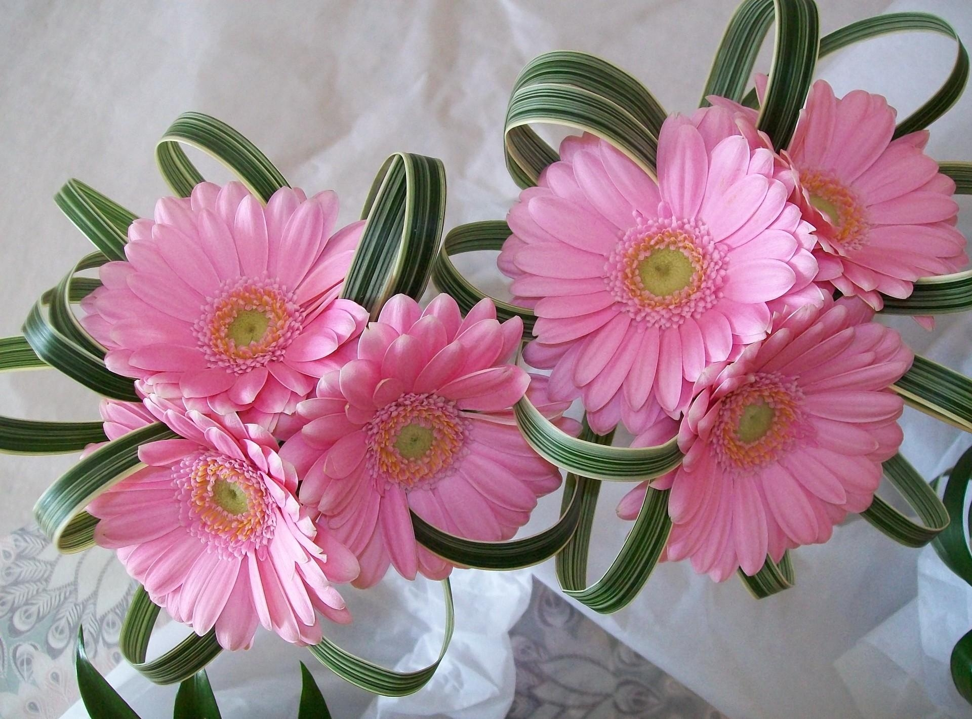75865 download wallpaper Flowers, Gerberas, Registration, Typography, Composition screensavers and pictures for free