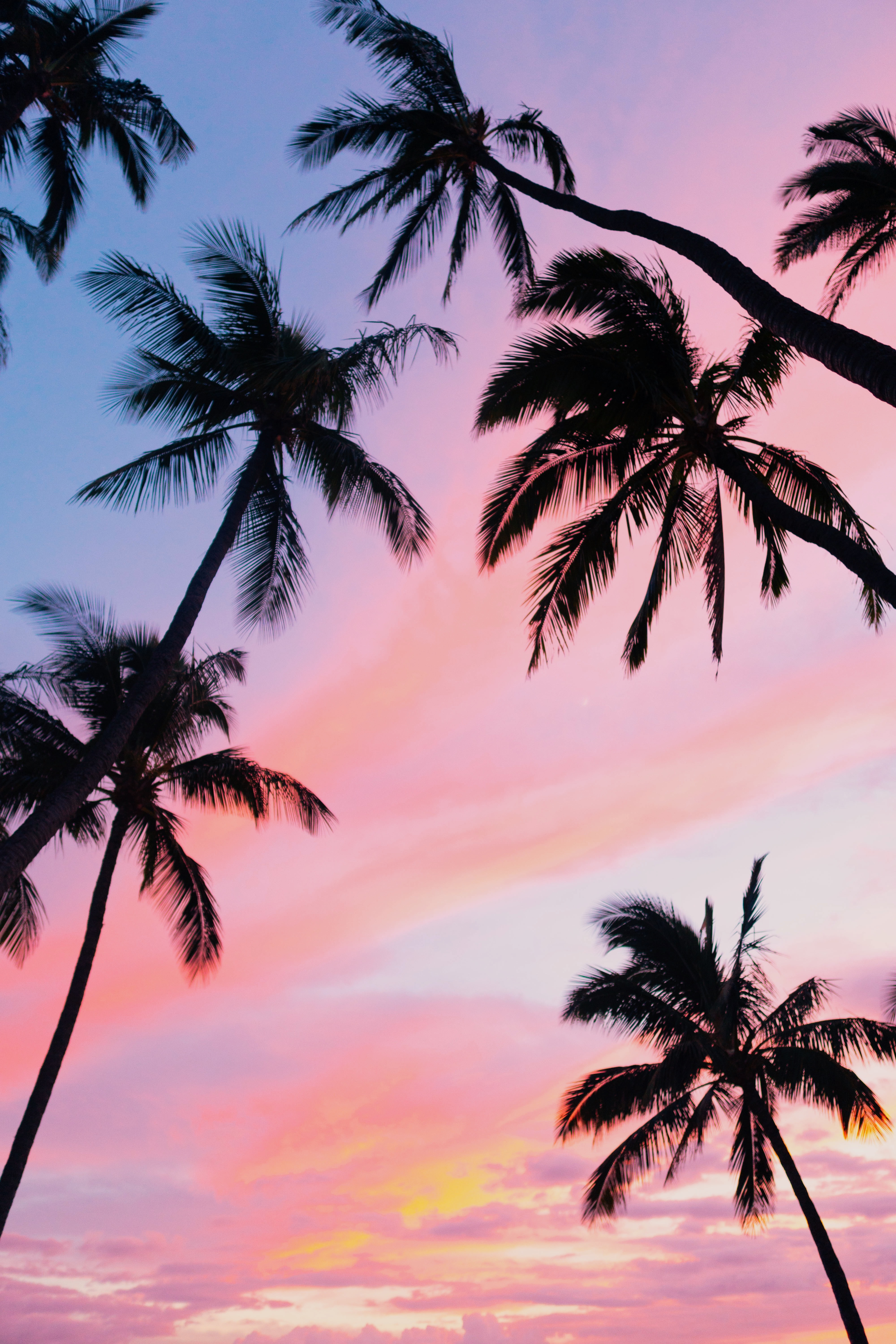 123581 download wallpaper Nature, Sky, Bottom View, Clouds, Tropics, Palms screensavers and pictures for free