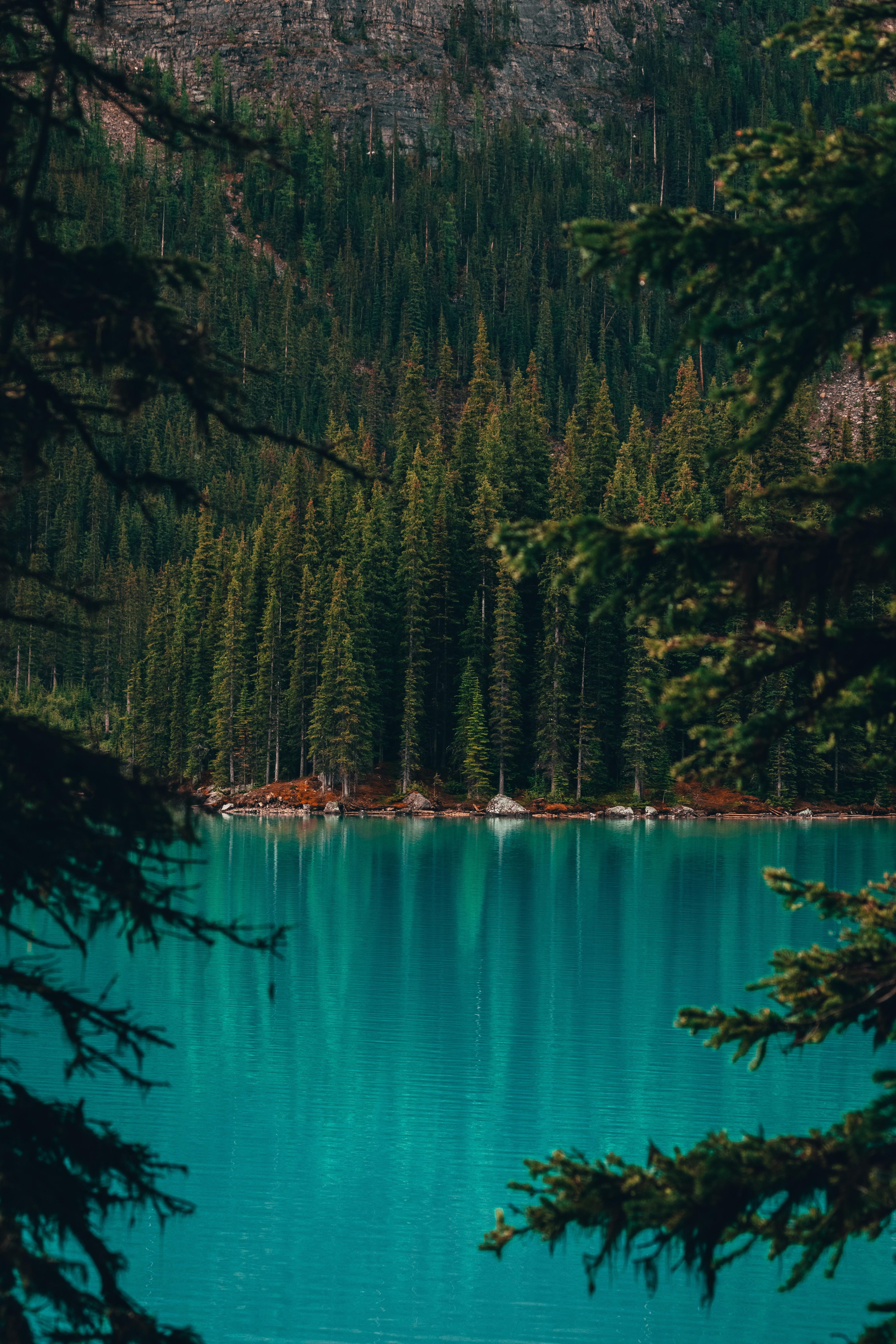 152590 скачать обои Природа, Озеро, Берег, Лес, Деревья, Вода, Сосны - заставки и картинки бесплатно