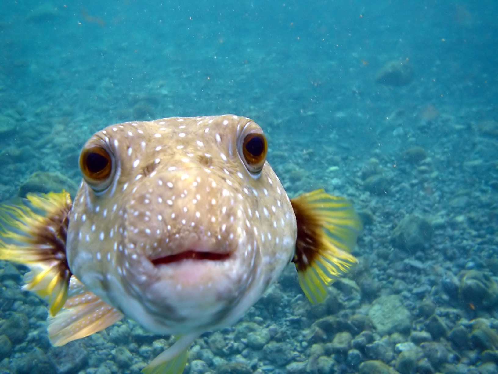 114316 download wallpaper Animals, Small Fish, Fishy, Water, Ocean, Sea screensavers and pictures for free