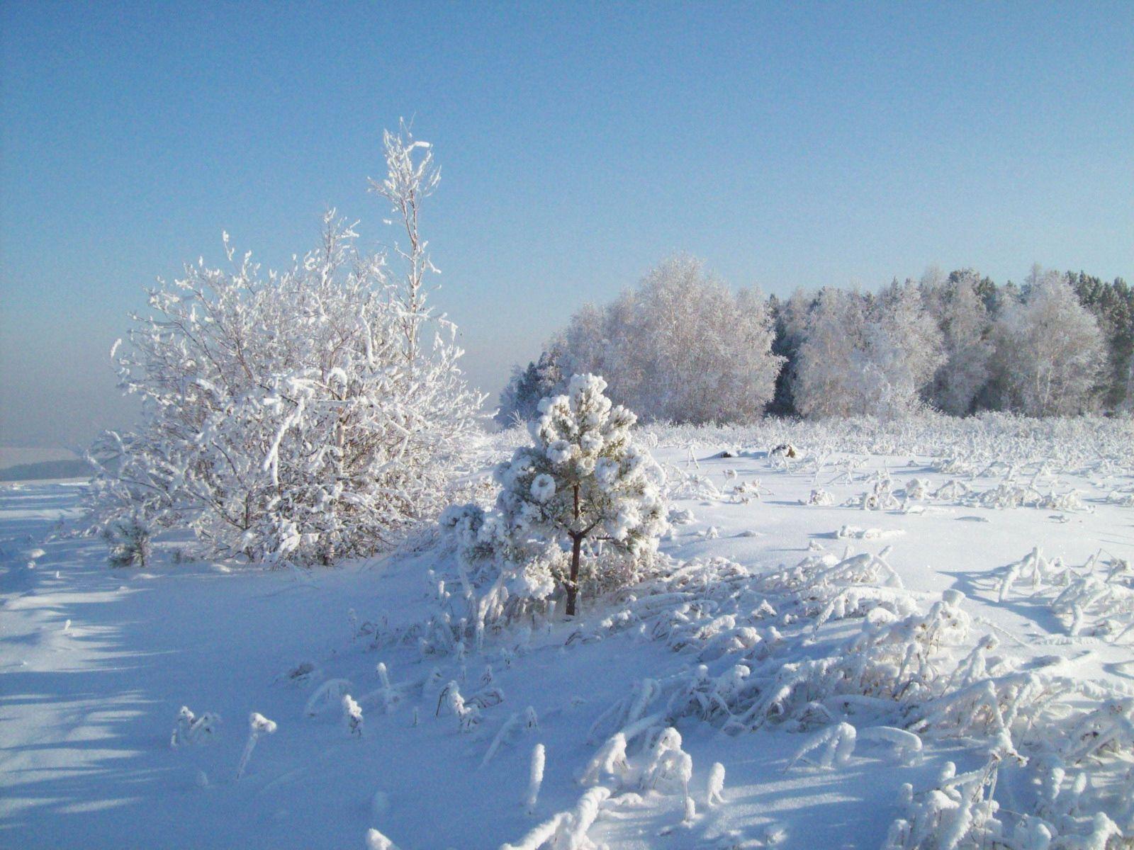 94118 скачать обои Природа, Снег, Иней, Деревья, Холод - заставки и картинки бесплатно