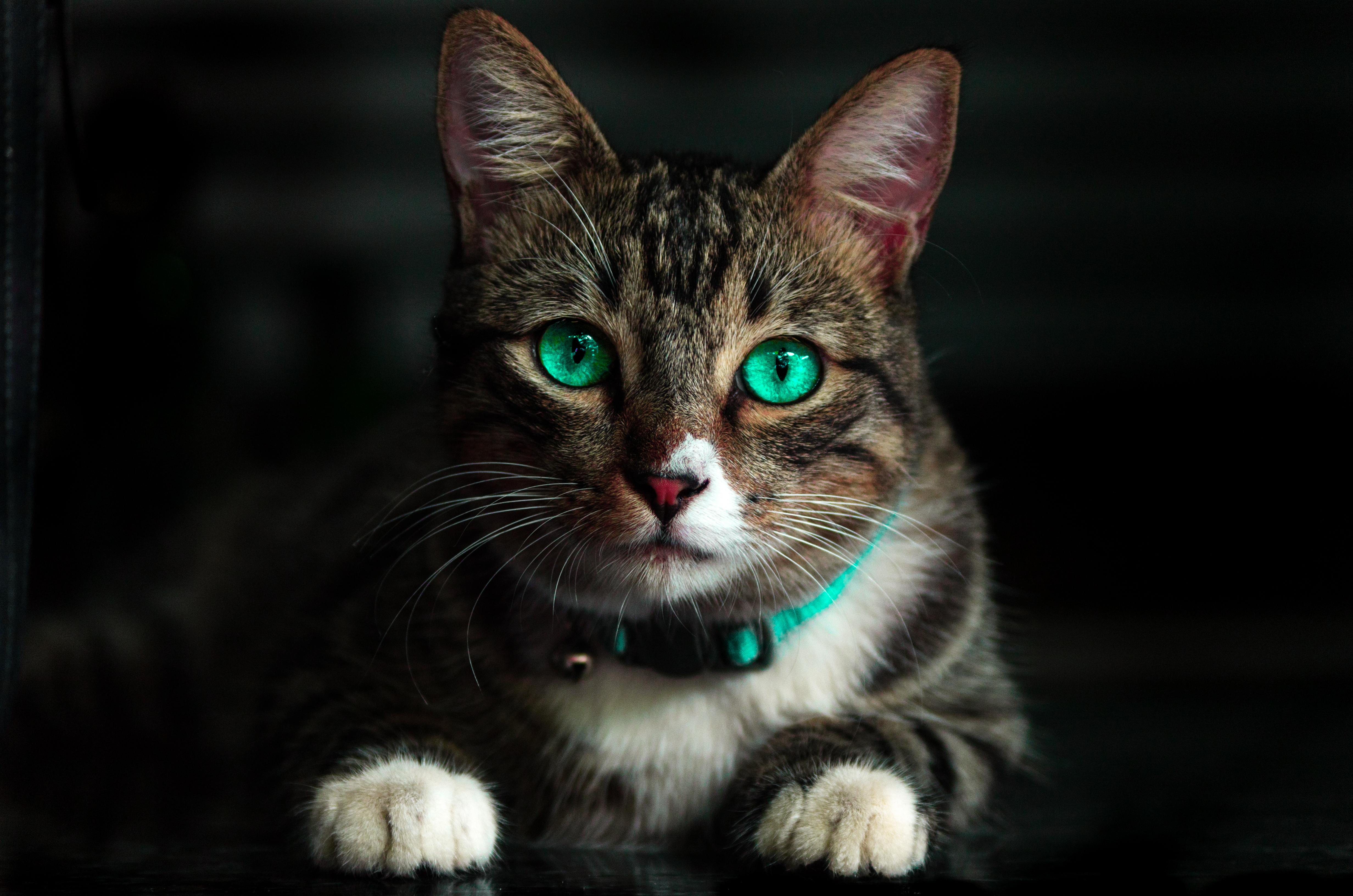 129335 Screensavers and Wallpapers Beautiful for phone. Download Animals, Cat, Beautiful, Sight, Opinion, Green Eyed, Green-Eyed pictures for free