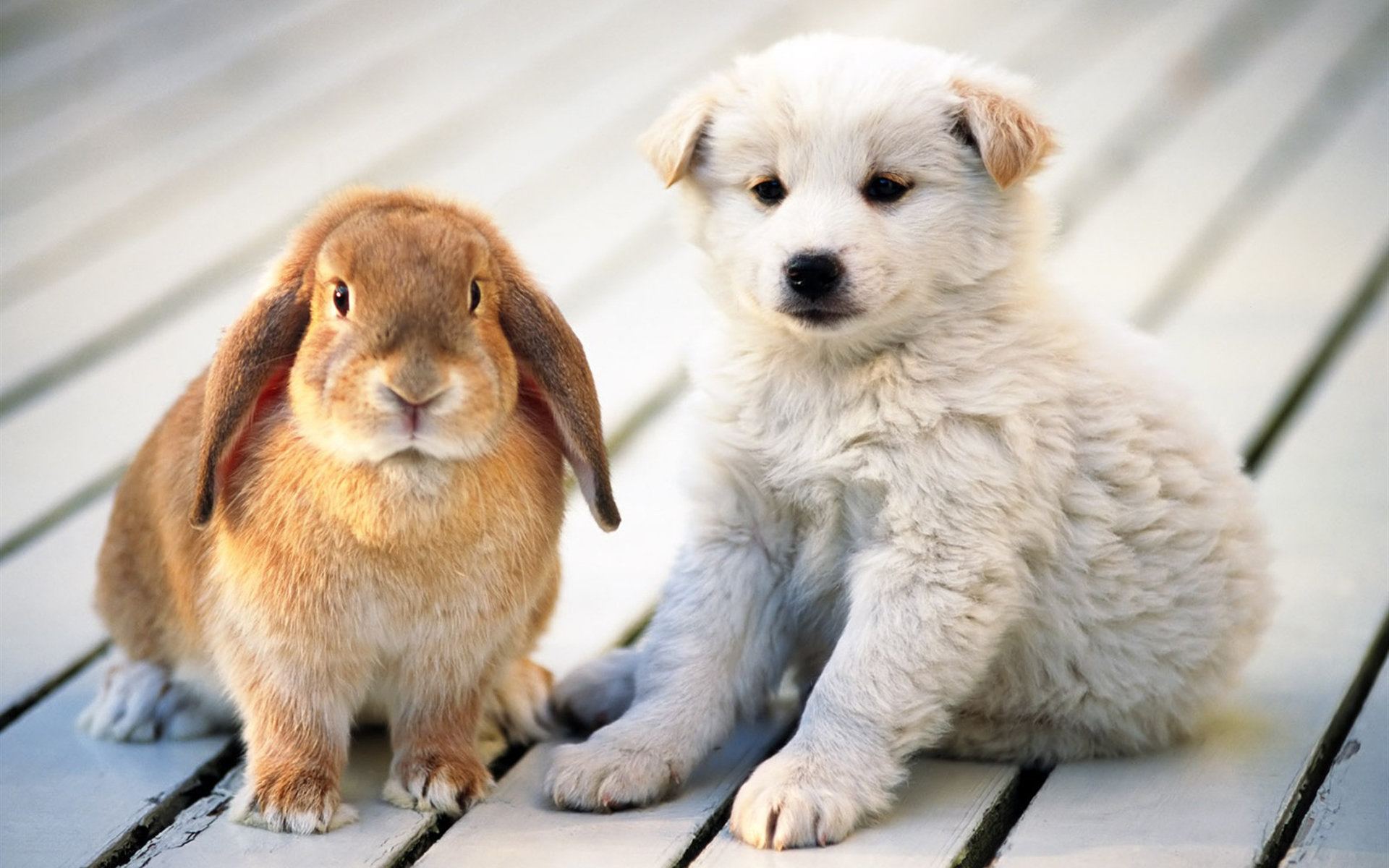 17098 Screensavers and Wallpapers Rabbits for phone. Download Animals, Dogs, Rabbits pictures for free