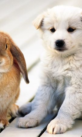 17098 download wallpaper Animals, Dogs, Rabbits screensavers and pictures for free