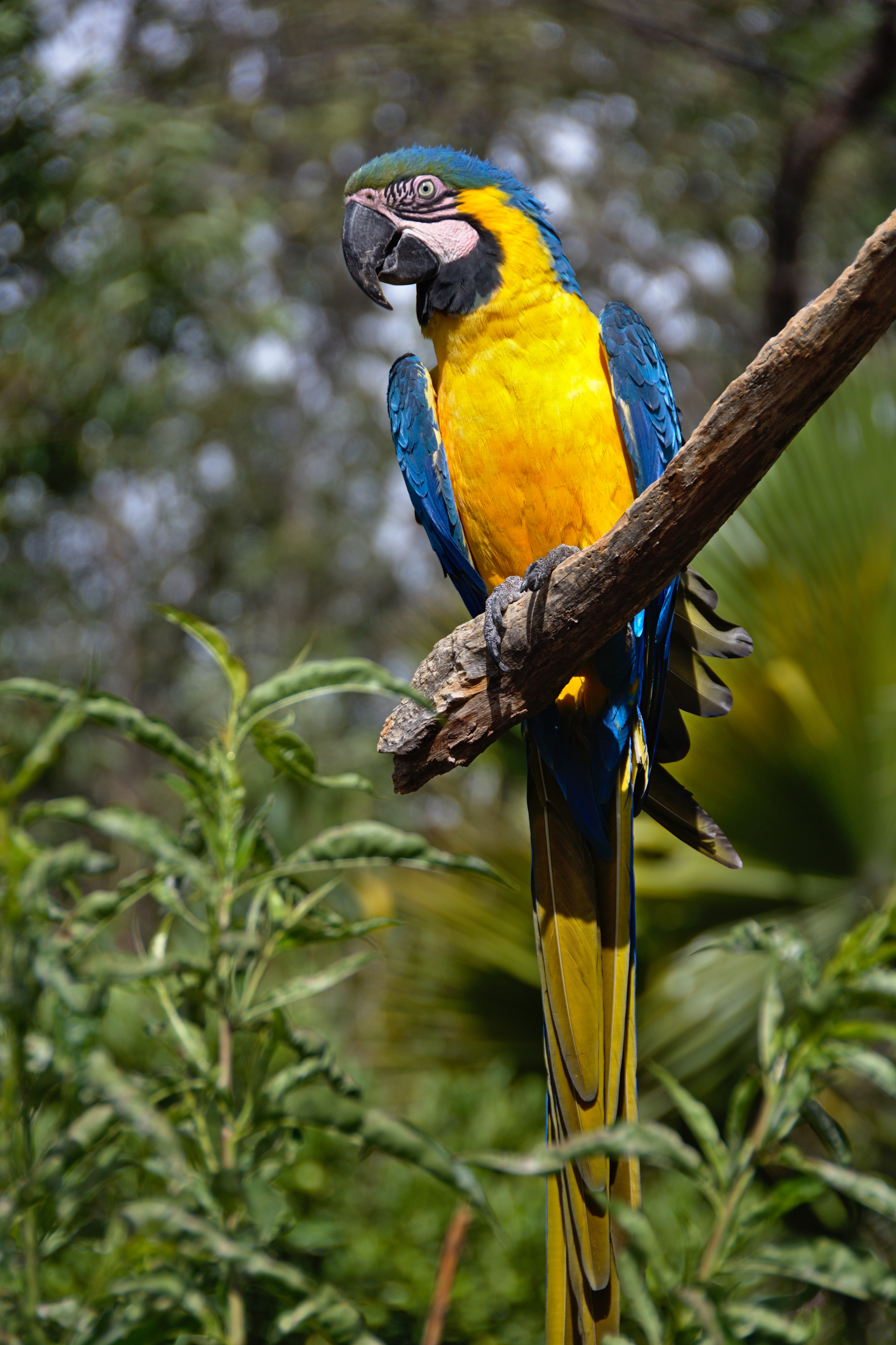 126013 download wallpaper Animals, Macaw, Parrots, Bird, Tail, Bright screensavers and pictures for free