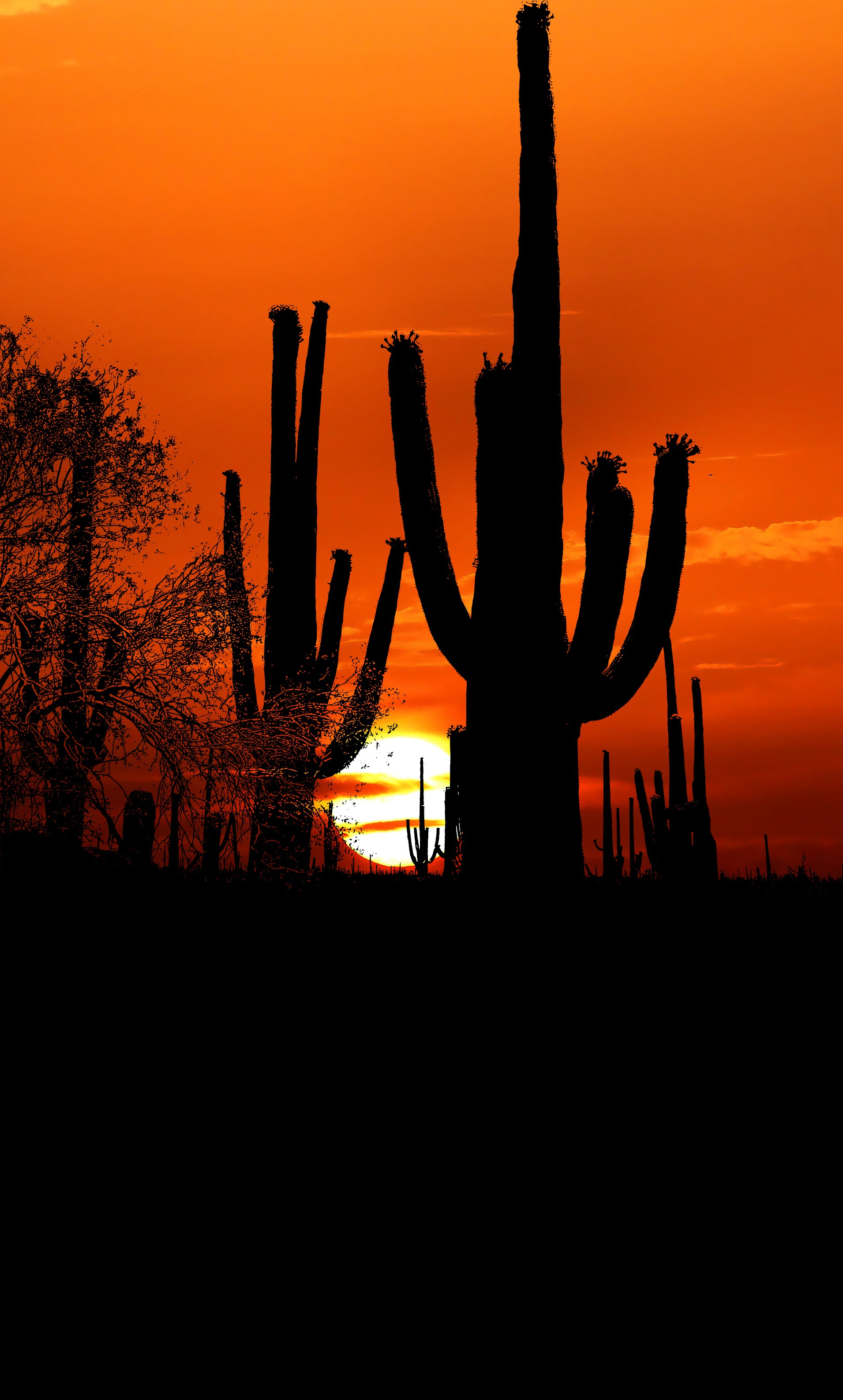 118407 download wallpaper Cactuses, Sunset, Sun, Twilight, Dark, Dusk, Outlines screensavers and pictures for free