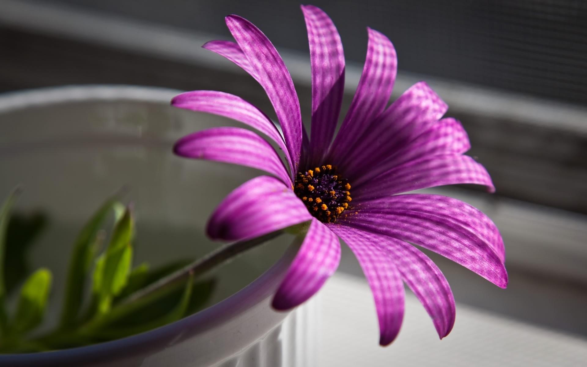 41285 скачать Фиолетовые обои на телефон бесплатно, Растения, Цветы Фиолетовые картинки и заставки на мобильный