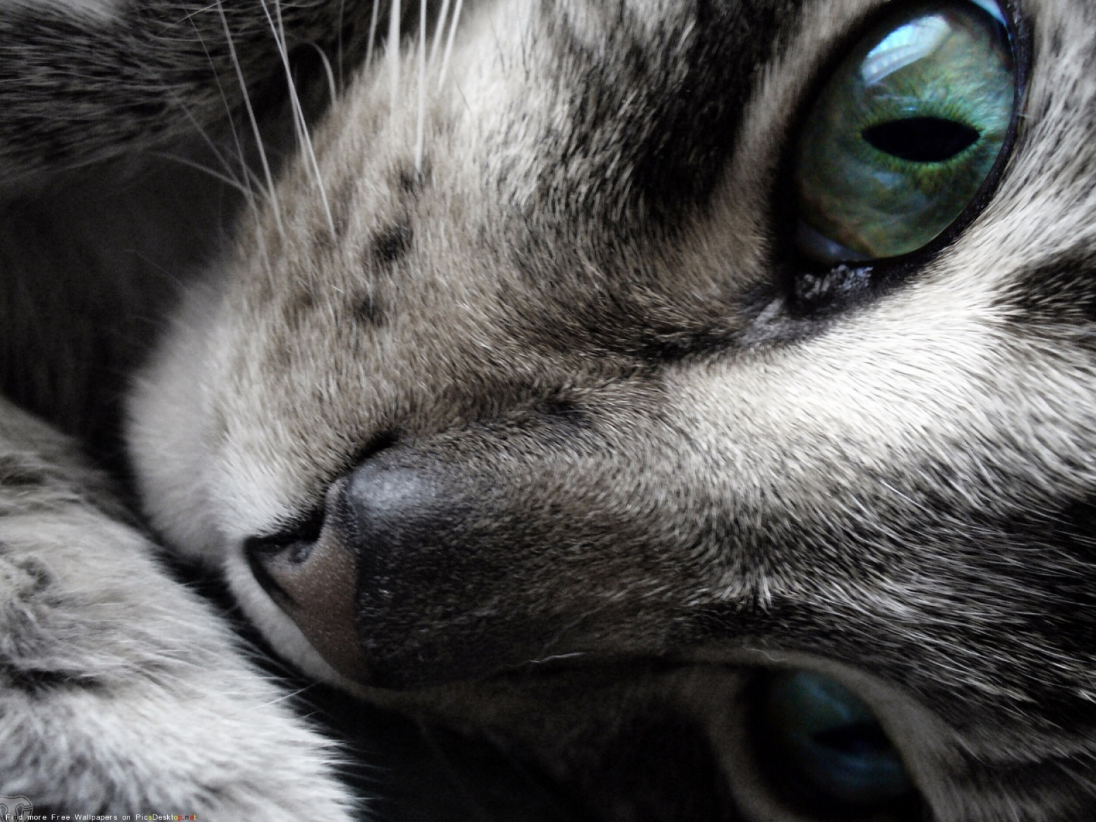 7883 download wallpaper Animals, Cats screensavers and pictures for free