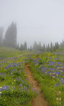 6779 скачать обои Растения, Пейзаж, Цветы - заставки и картинки бесплатно