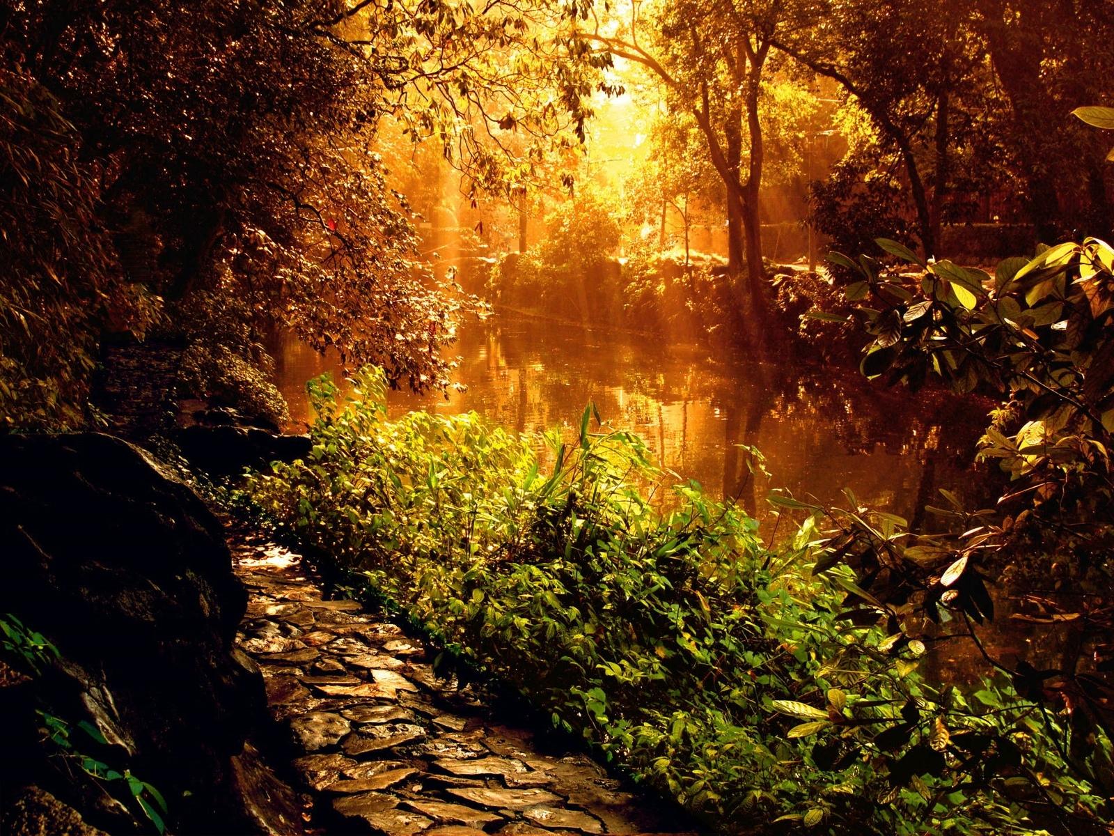 5307 скачать обои Пейзаж, Река, Деревья - заставки и картинки бесплатно