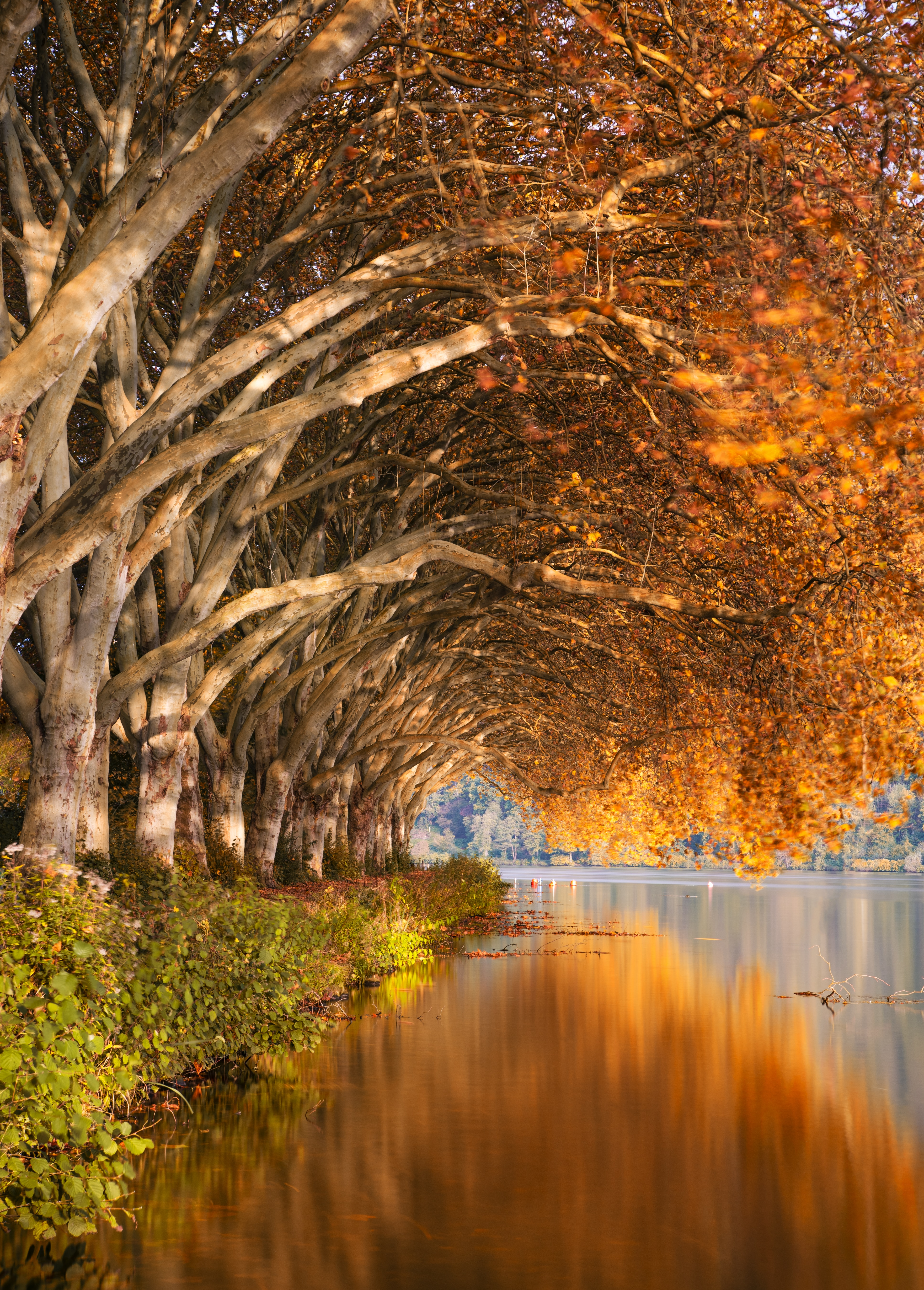 98833 download wallpaper Autumn, Landscape, Nature, Trees, Lake, Shore, Bank screensavers and pictures for free