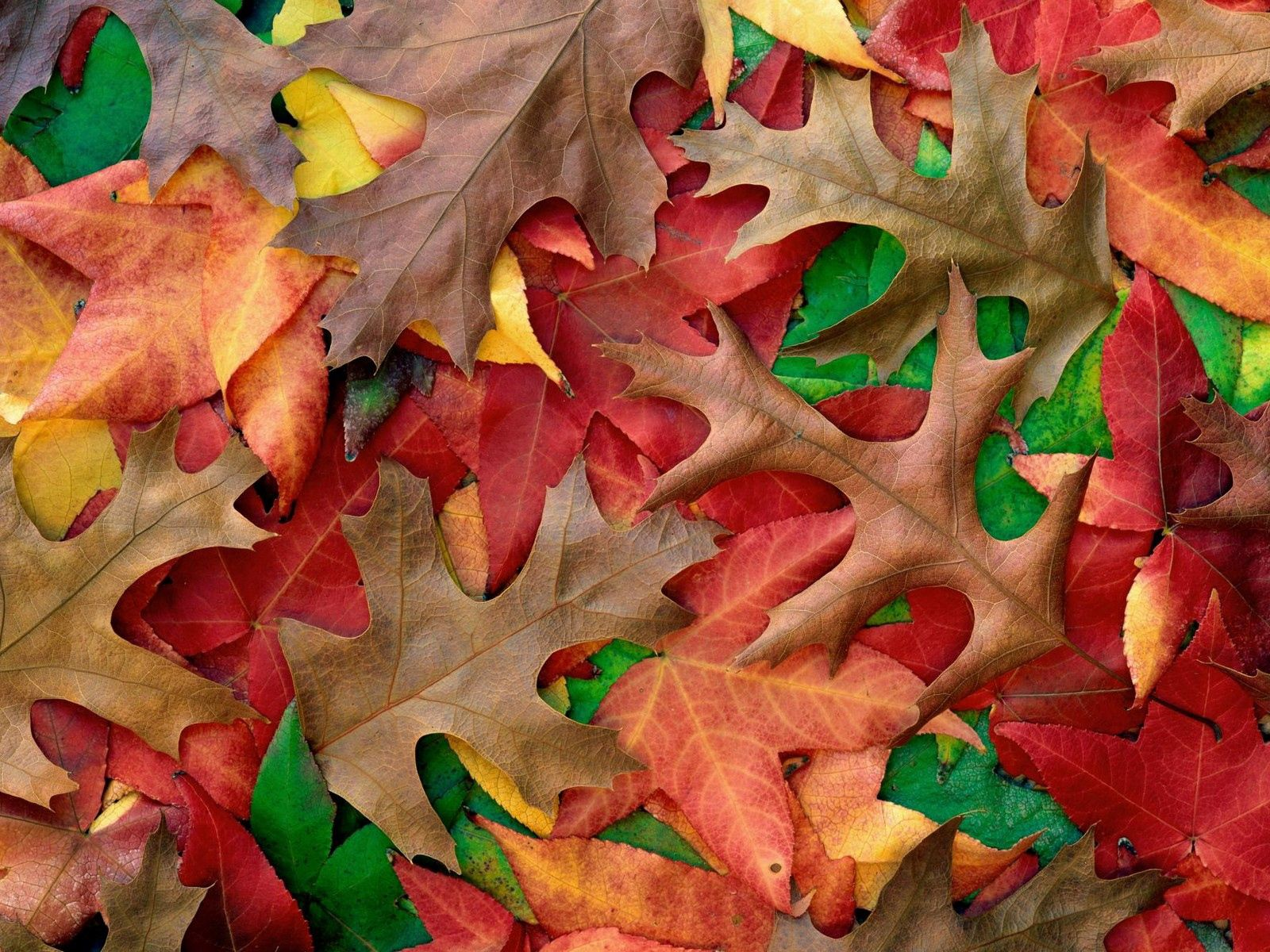 97495 Screensavers and Wallpapers Colors for phone. Download Nature, Autumn, Leaves, Colors, Color, Paints, Shades pictures for free