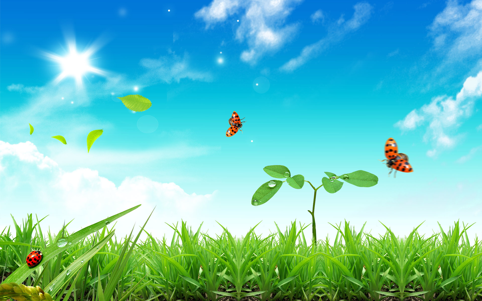 5570 download wallpaper Landscape, Grass, Sky, Sun screensavers and pictures for free