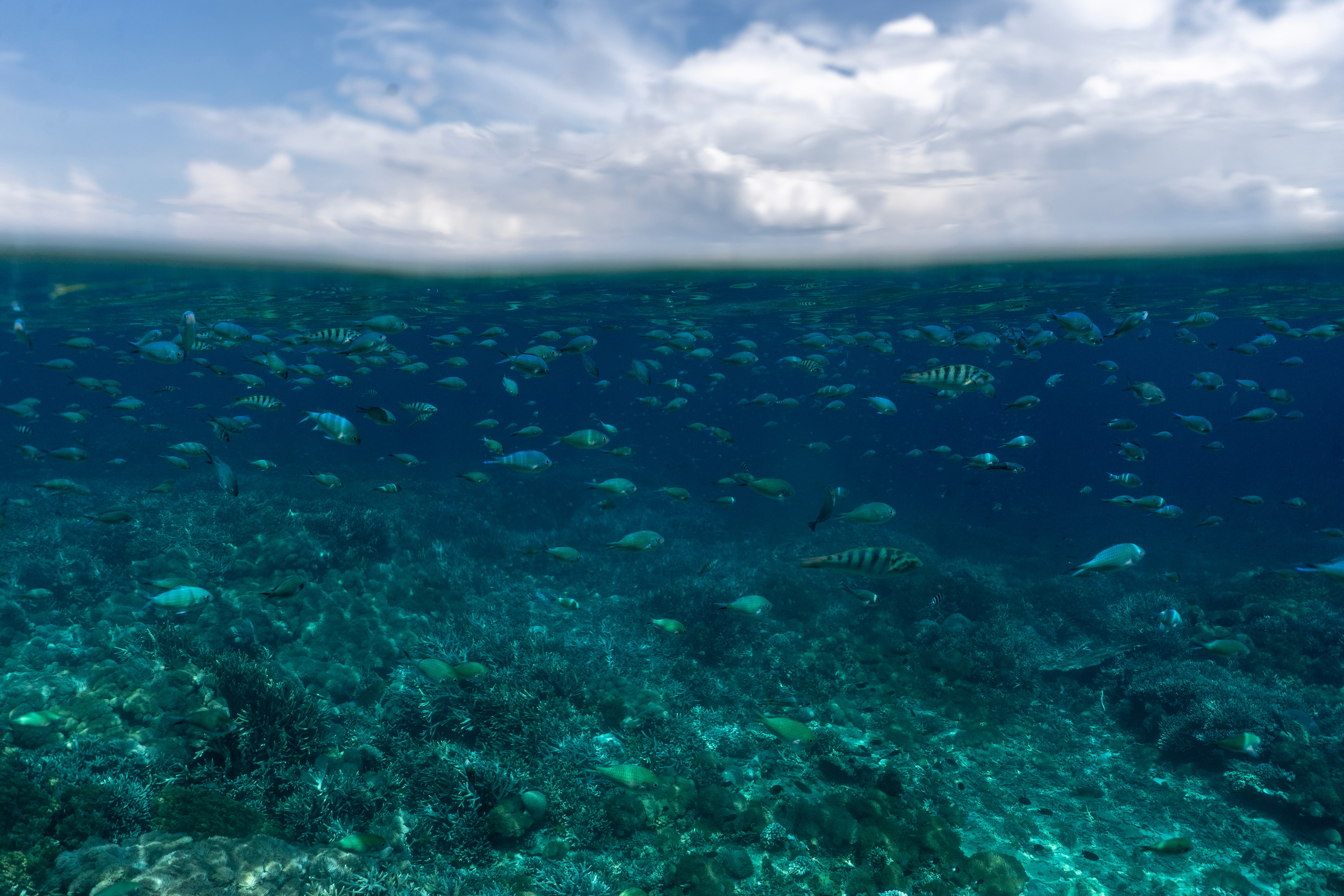 116051 download wallpaper Nature, Underwater World, Ocean, Fishes screensavers and pictures for free