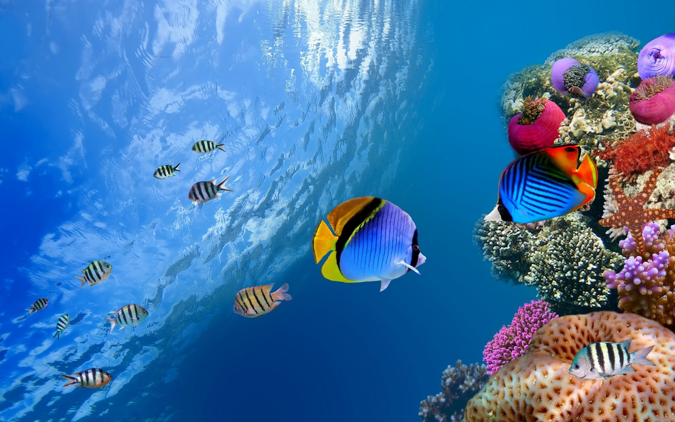 19364 download wallpaper Background, Sea, Fishes screensavers and pictures for free