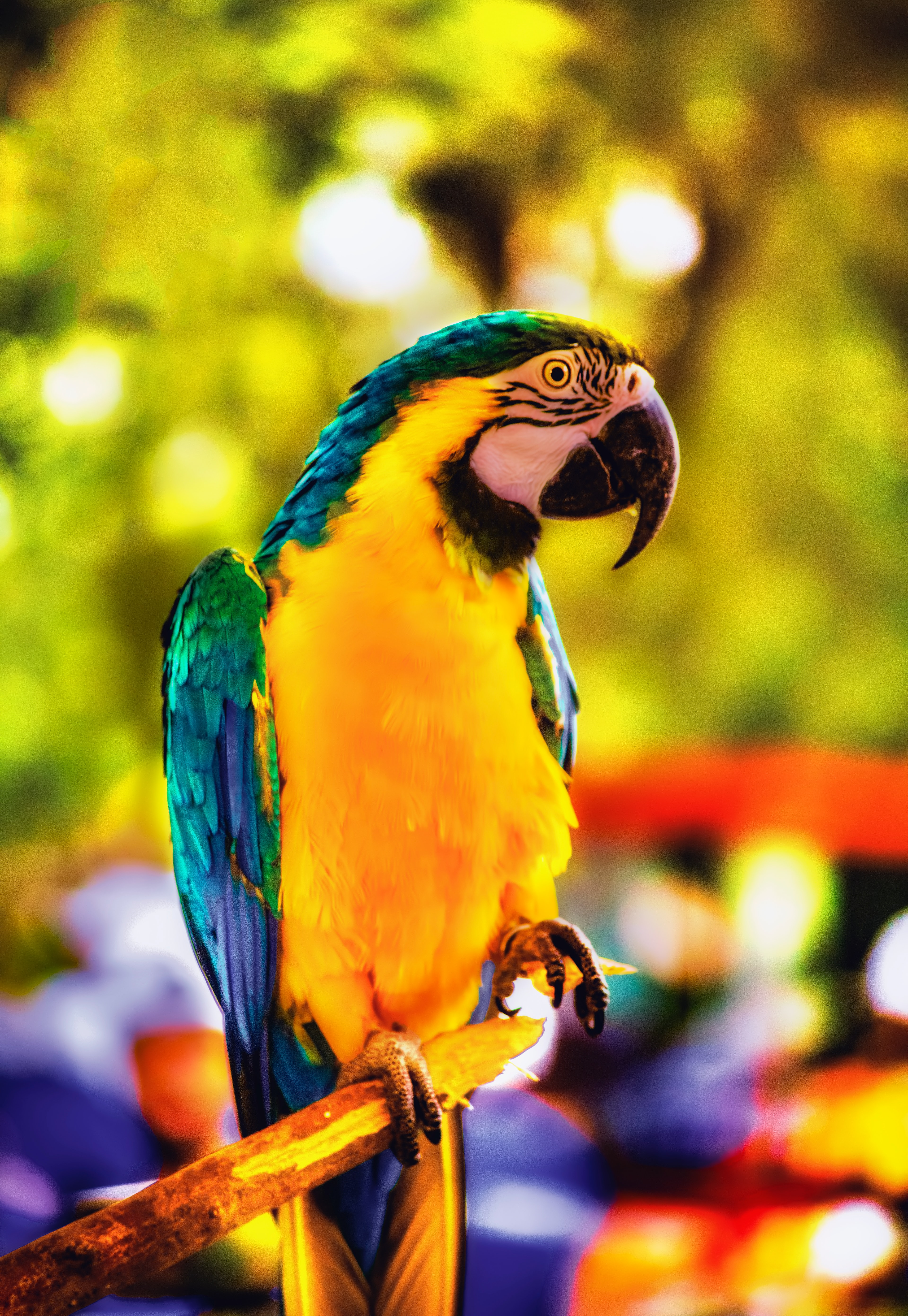 83996 download wallpaper Animals, Macaw, Parrots, Bird, Bright, Branch screensavers and pictures for free