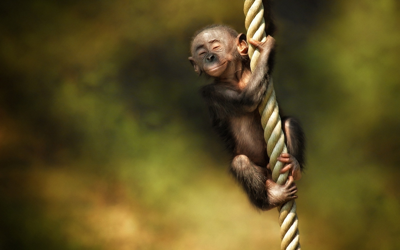 15607 Screensavers and Wallpapers Monkeys for phone. Download Funny, Animals, Monkeys pictures for free
