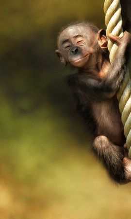 15607 download wallpaper Funny, Animals, Monkeys screensavers and pictures for free