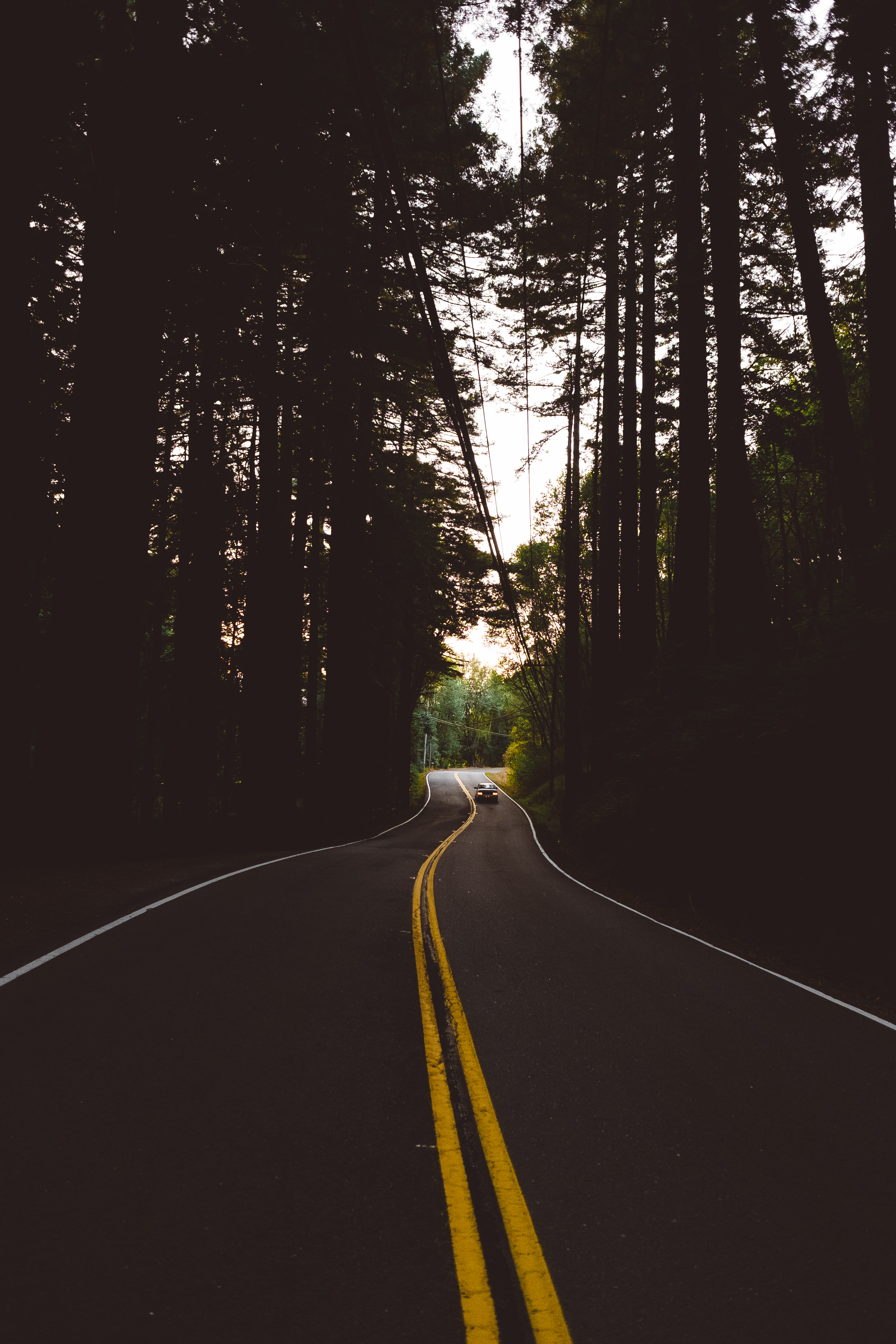 105901 скачать обои Темные, Дорога, Разметка, Машины, Лес, Деревья, Вечер - заставки и картинки бесплатно