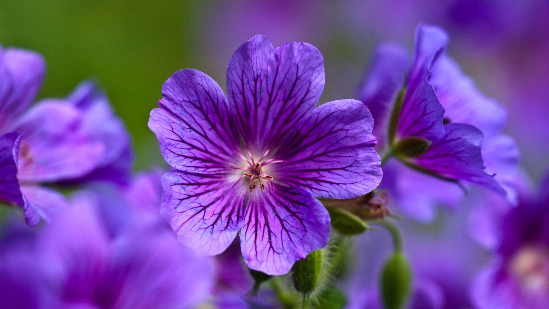 40293 télécharger le fond d'écran Plantes, Fleurs - économiseurs d'écran et images gratuitement