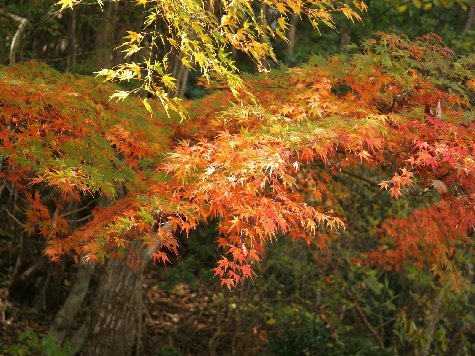 7670 скачать обои Пейзаж, Деревья, Осень, Листья - заставки и картинки бесплатно