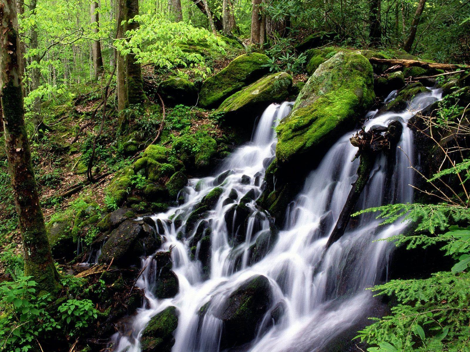 105323 économiseurs d'écran et fonds d'écran Cascades sur votre téléphone. Téléchargez Nature, Noyaux, Cascades, Cascade, Forêt, Mousse images gratuitement