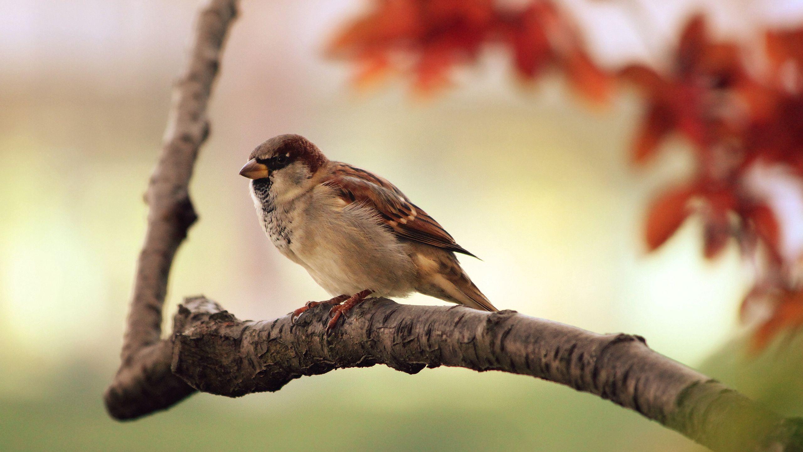 108529 скачать обои Животные, Воробей, Листья, Дерево, Ветка, Птица - заставки и картинки бесплатно