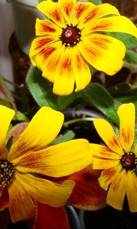47127 baixar papel de parede Plantas, Flores - protetores de tela e imagens gratuitamente