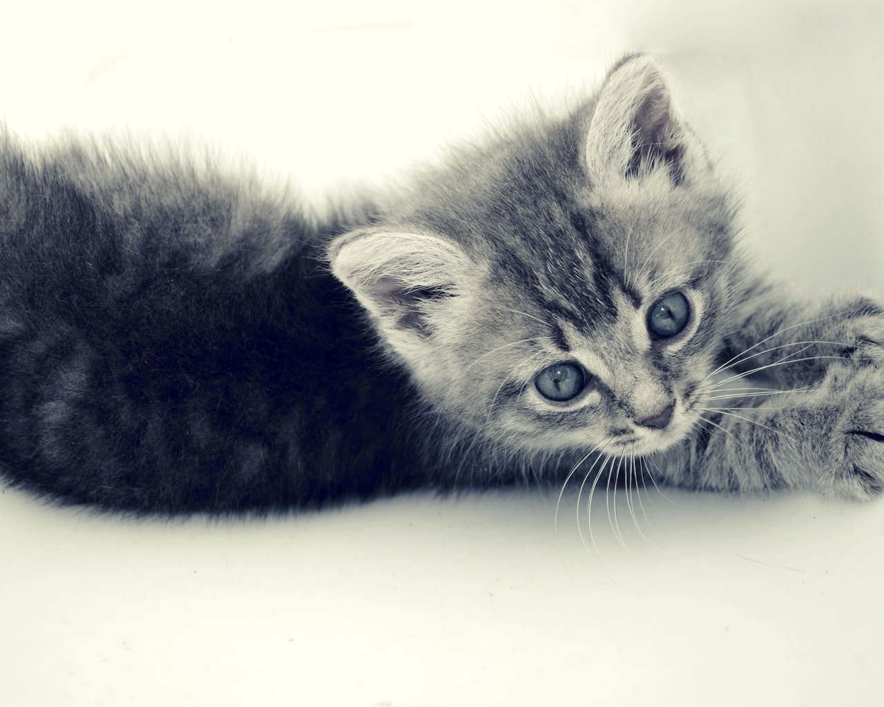 12682 download wallpaper Animals, Cats screensavers and pictures for free