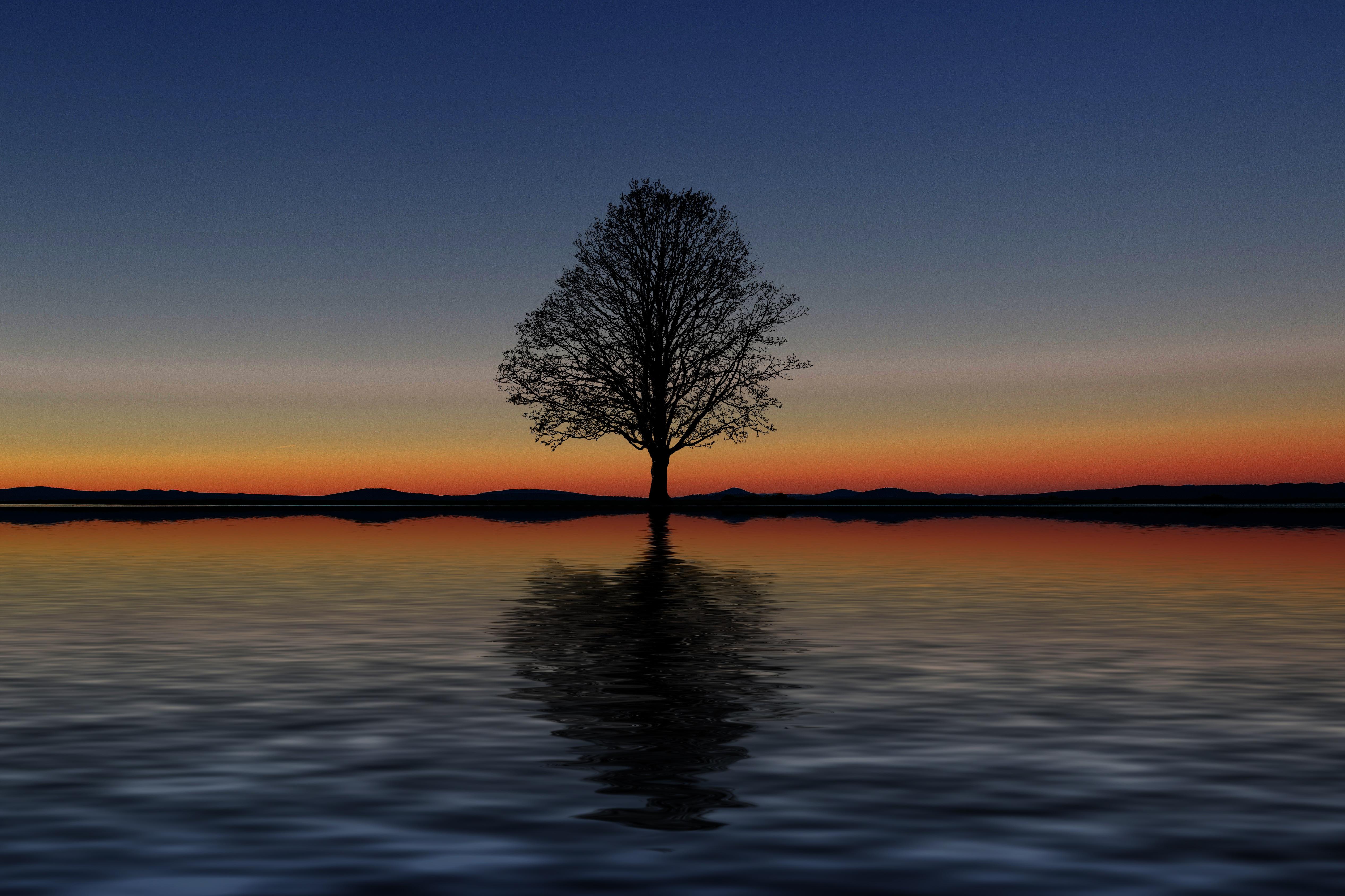 64374 Hintergrundbild 480x800 kostenlos auf deinem Handy, lade Bilder Sunset, Horizont, Reflexion, Holz, Baum, Minimalismus, Allein, Einsam 480x800 auf dein Handy herunter