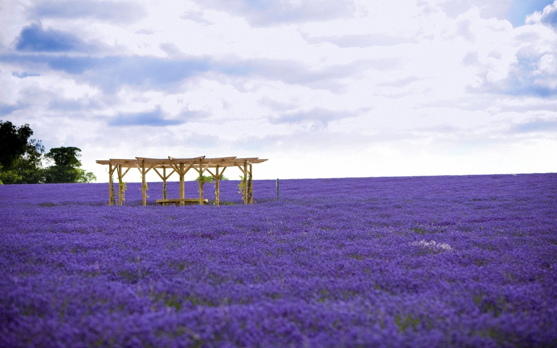 154659 download wallpaper Nature, Alcove, Bower, Field, Lilac, Flowers screensavers and pictures for free