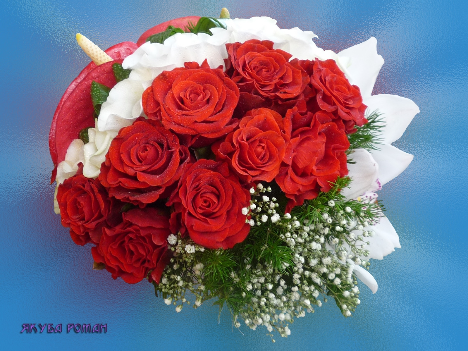 3436 Hintergrundbild herunterladen Blumen, Feiertage, Pflanzen, Roses, Postkarten - Bildschirmschoner und Bilder kostenlos
