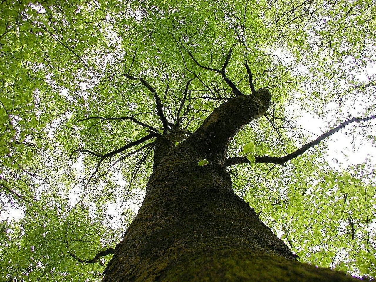 8420 скачать обои Пейзаж, Деревья - заставки и картинки бесплатно