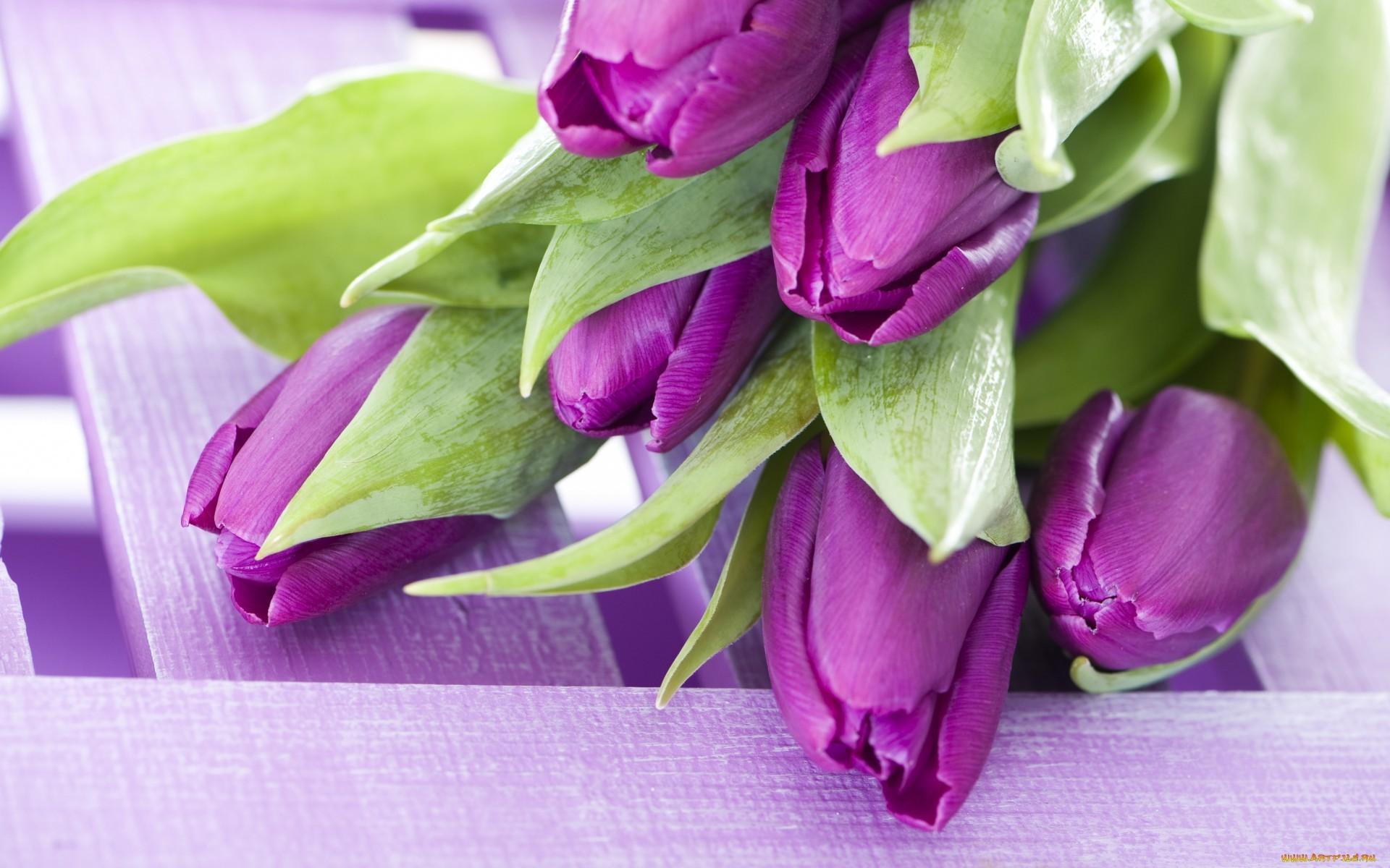 17681 скачать обои Тюльпаны, Растения, Цветы - заставки и картинки бесплатно