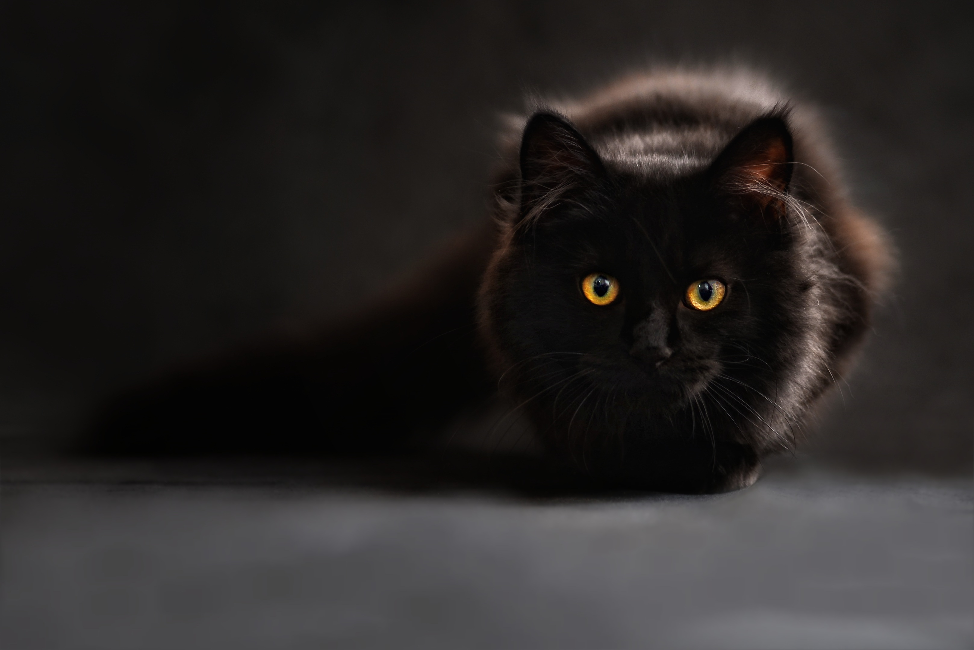 114048 Screensavers and Wallpapers Eyes for phone. Download Animals, Cat, Eyes, Looks, Maine Coon, Maine pictures for free