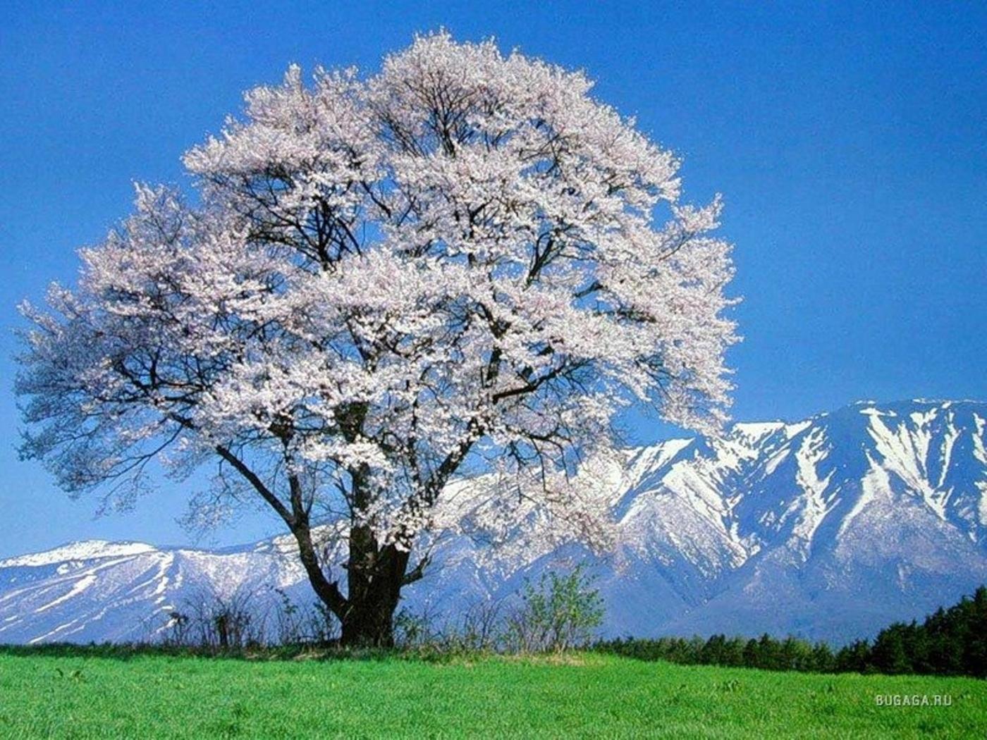 24794 скачать обои Пейзаж, Цветы, Деревья, Горы - заставки и картинки бесплатно