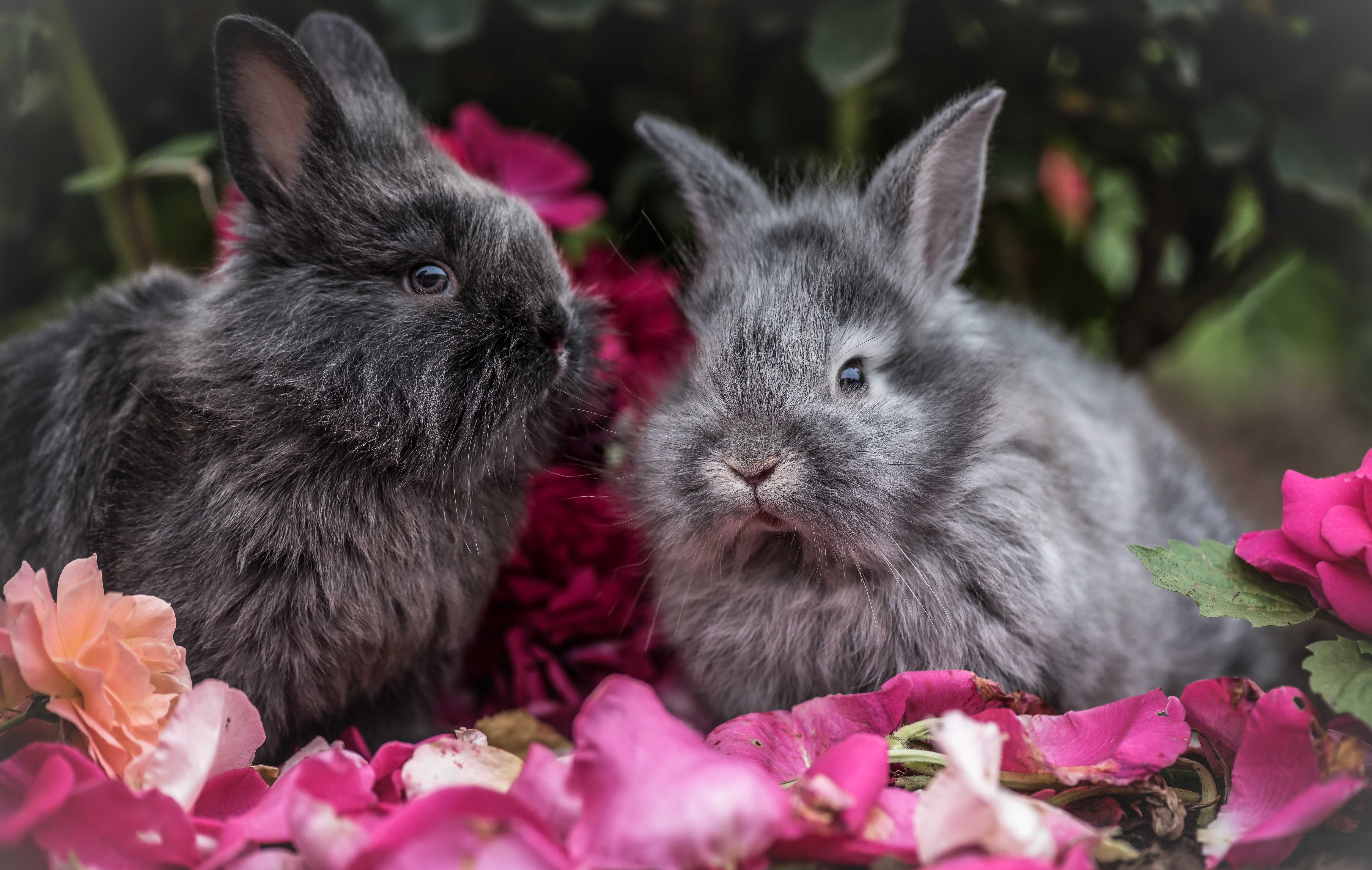 147702 download wallpaper Animals, Flowers, Rabbits, Fluffy, Grey, Rabbit screensavers and pictures for free