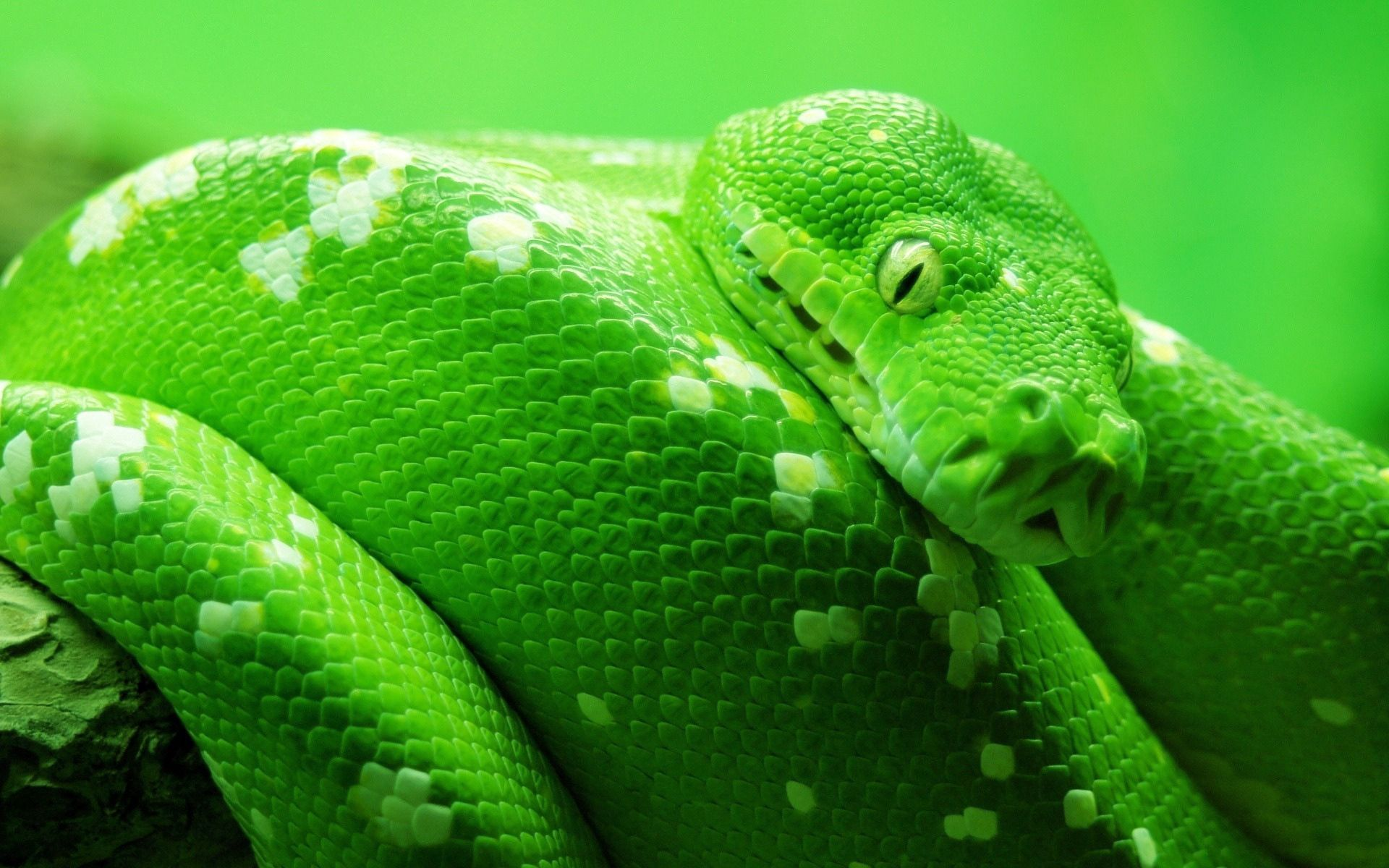 88105 Screensavers and Wallpapers Snake for phone. Download Animals, Color, Stains, Spots, Snake, Head pictures for free