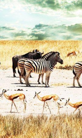 104244 скачать обои Животные, Буйволы, Африка, Небо, Саванна, Антилопы, Зебры - заставки и картинки бесплатно
