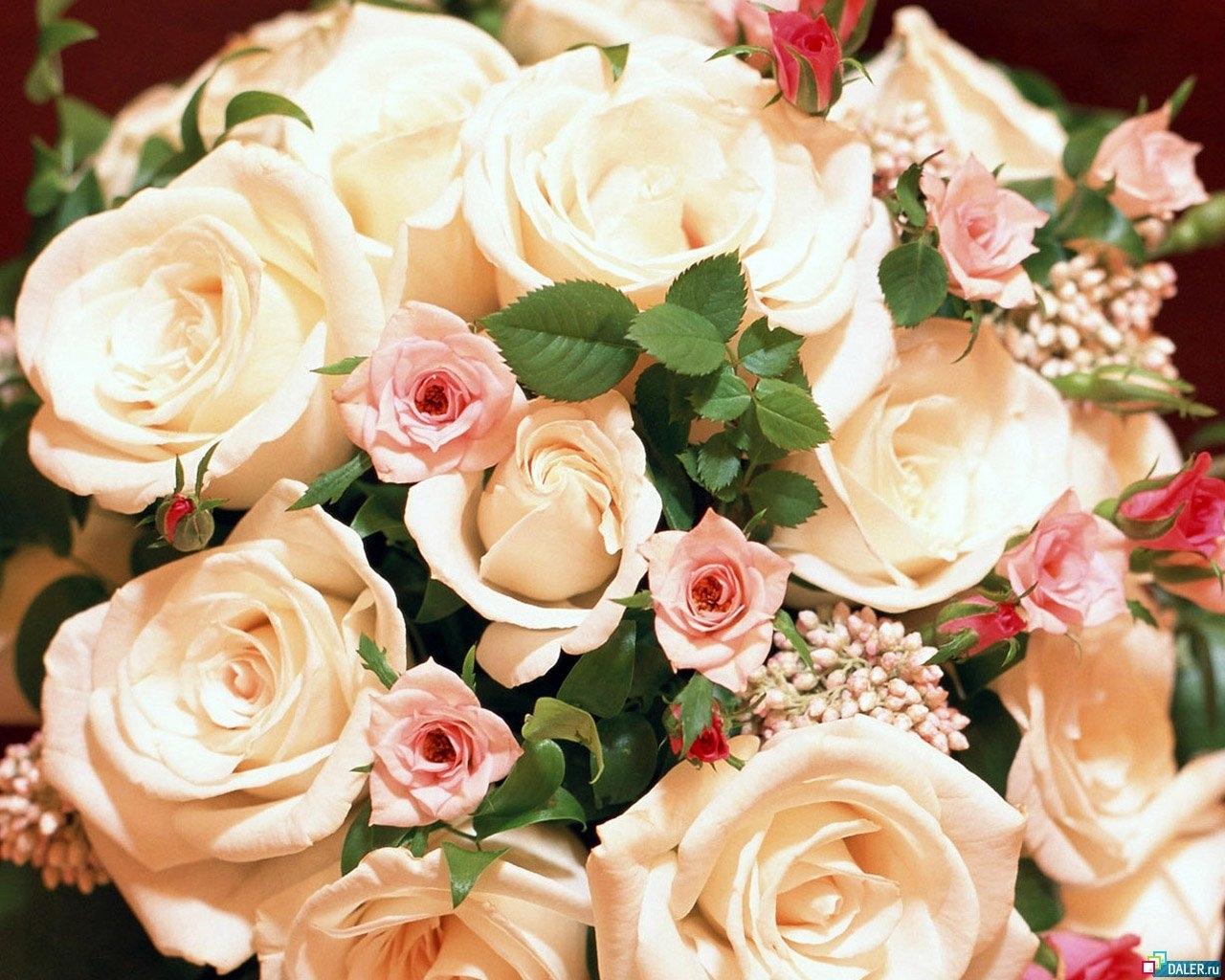 3446 скачать обои Растения, Праздники, Открытки, Цветы, Розы - заставки и картинки бесплатно