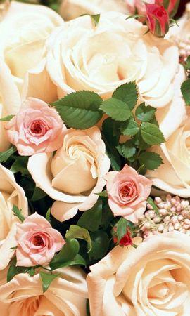 3446 скачать обои Праздники, Растения, Цветы, Розы, Открытки - заставки и картинки бесплатно