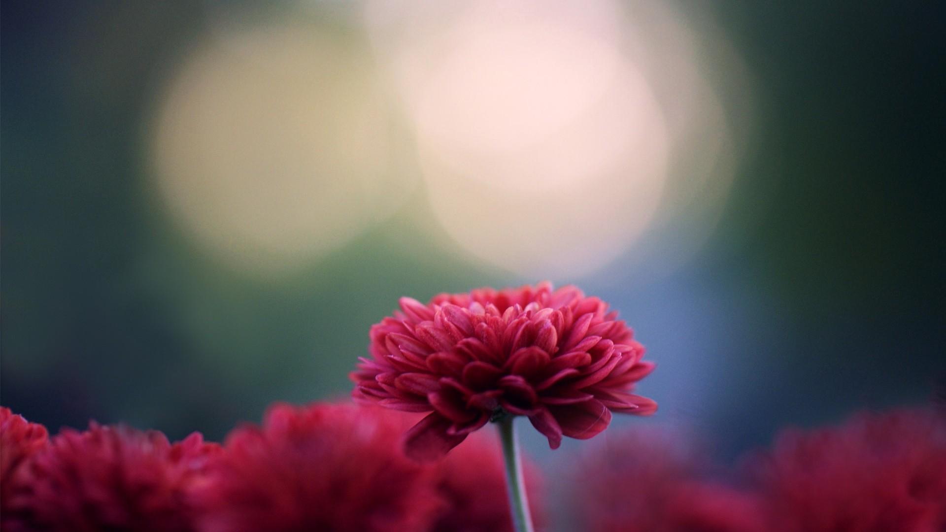 21742 скачать обои Растения, Цветы - заставки и картинки бесплатно