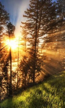 23739 скачать обои Пейзаж, Деревья, Закат, Трава, Солнце - заставки и картинки бесплатно