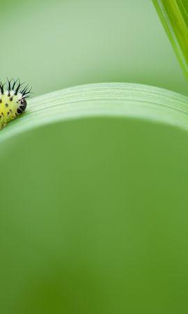 お使いの携帯電話の89360スクリーンセーバーと壁紙昆虫。 大きい, マクロ, ハバチオークグリーン, ピルグリムオークグリーン, 幼虫, 昆虫の写真を無料でダウンロード